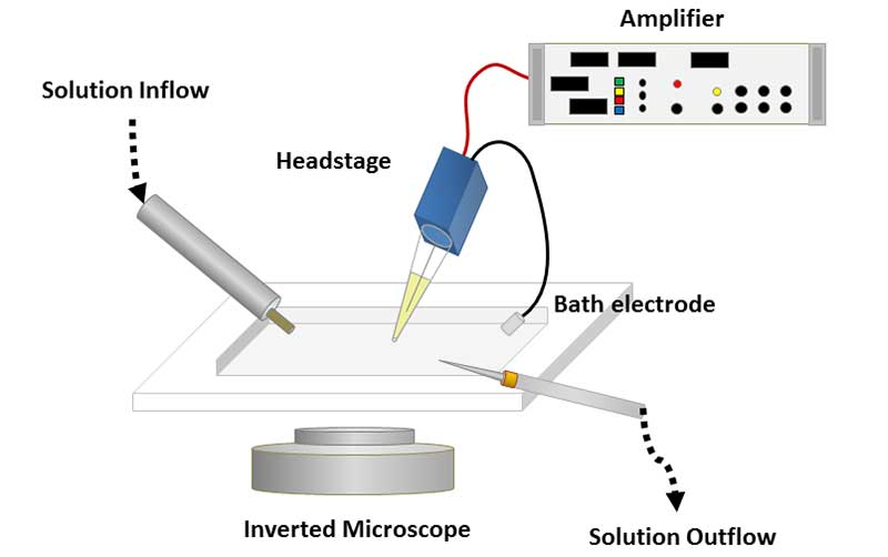 patch clamp method to record neuron activity